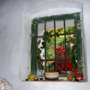 4. Starovické vinobraní